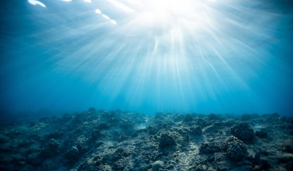 Underwater Photography of Ocean by Jeremy Bishop